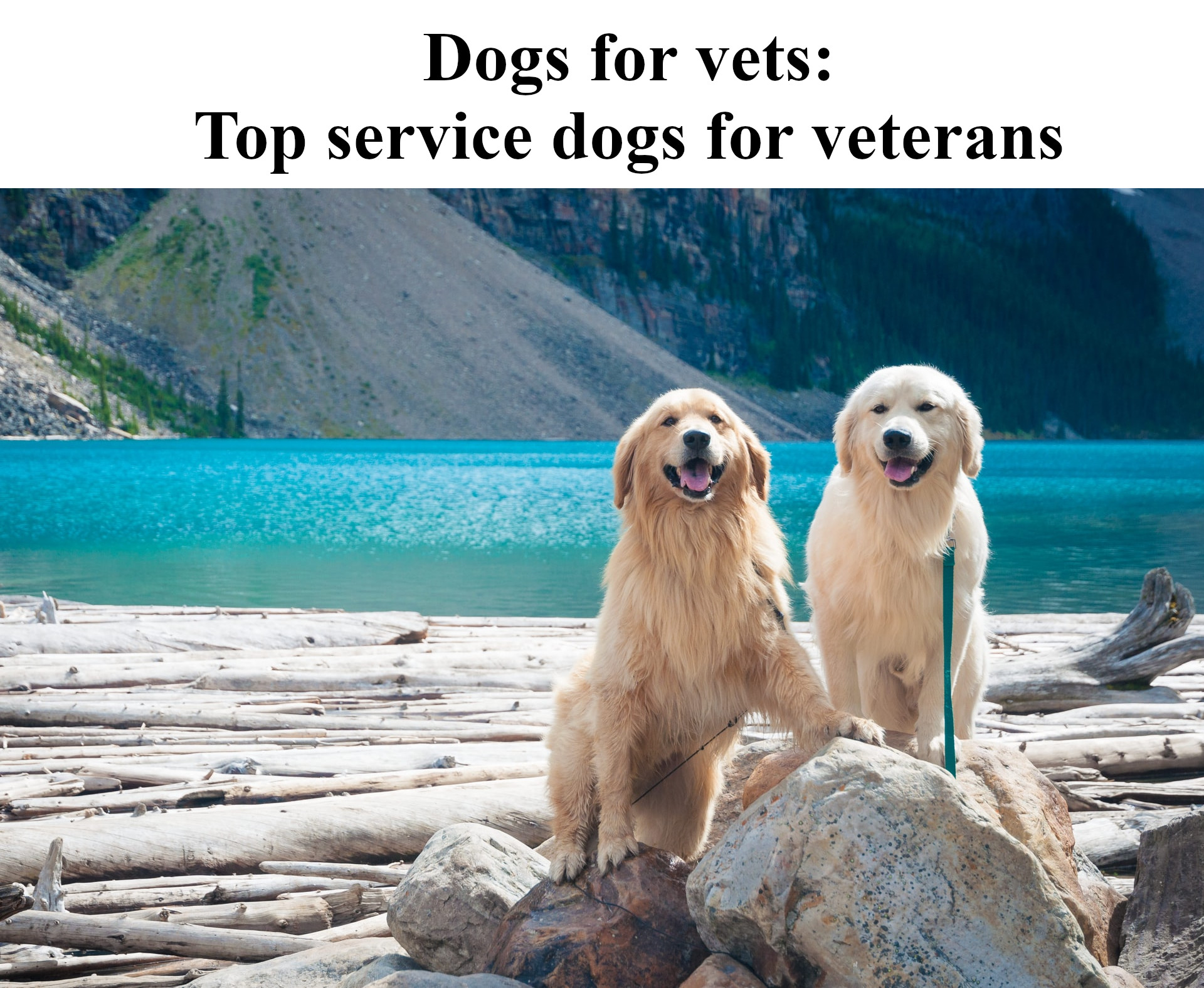 Dogs for vets: Top service dogs for veterans